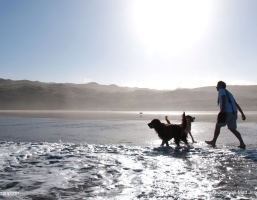 Dog Friendly Beaches In Cornwall From Porthtowan to Padstow