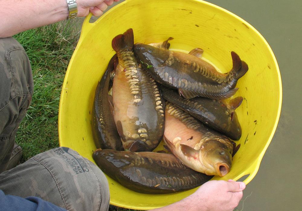 Fishing holidays in cornwall carp and coarse fishing for Colorado fish stocking