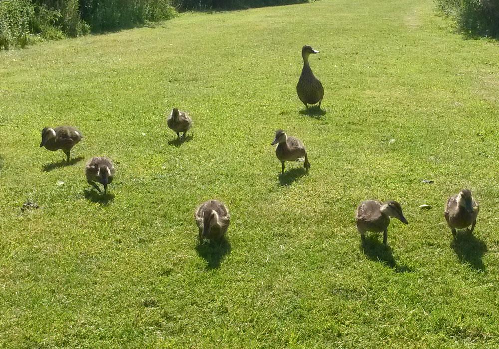 wildlife at Perran Springs Holiday Park