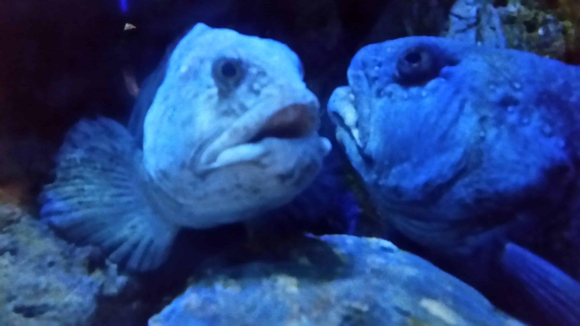 Newquay Blue Reef Aquarium Camping Cornwall Campsite