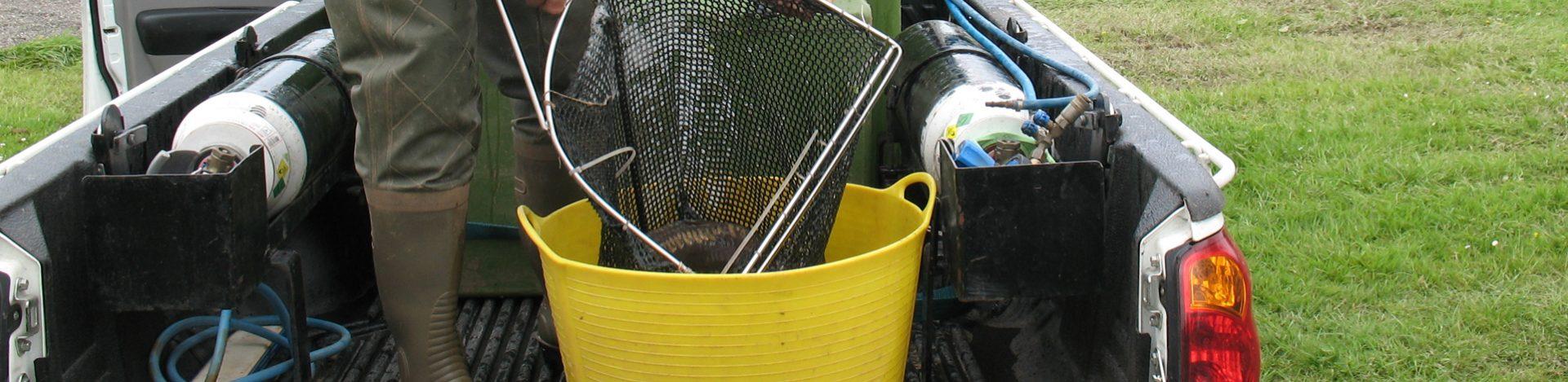 Holiday park fish stock