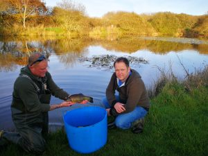 tench re-stocking