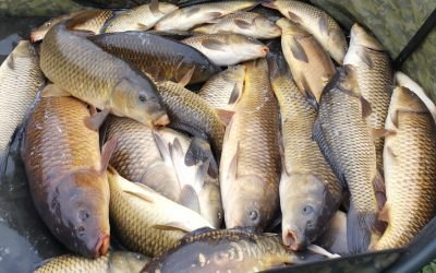 Fish Haul Of Over 125lb